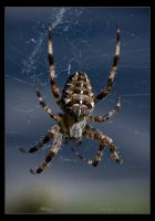 Arachnophobia 1 by Ciscofighter