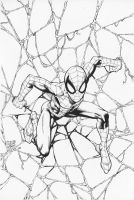 SpiderCover by airold