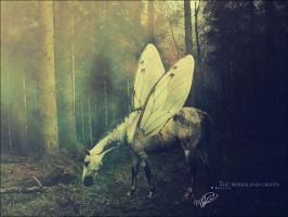 __The woodland creeps by Mouliny