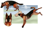 Schutzhund Your Dog Here - Completed by Canidae-Mayhem