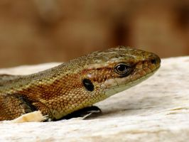 lizard by efeline