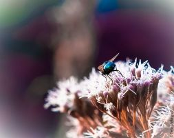 Ready For Take Off by AnelePhotography