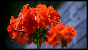 Orange... by ECKSbloodECKS