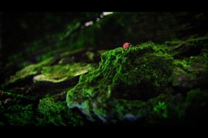 Ladybird by Francy-93