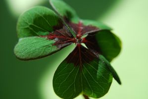 Shamrock by RowanLewgalon