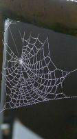 The Web at Night by DarkestPhotographer