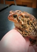 love me some toads by MxTeddybear