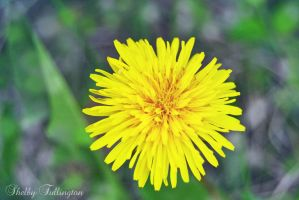 Beautiful Weed by ShelbyMelissa