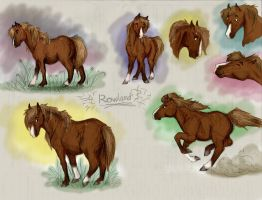 Rowland by Follyfoot