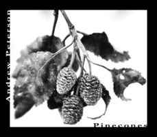 pinecones? by Pandyp
