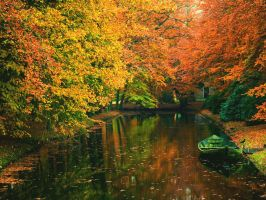 The Autumn forest stream by SottoPK