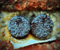 Rusted Nails in Brick by PAlisauskas