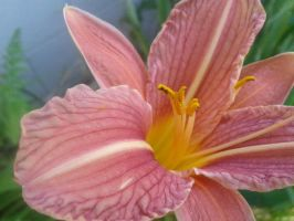 Lily 3 by Guiding-Light-HM