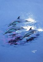 Pencil Dolphins 2 by nachoriesco