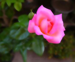 The Pink Panther's Rose by creativemikey