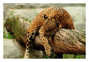 Sleeping Like a Log by amaliabastos