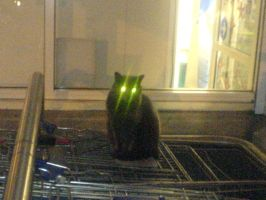 Evil cat by Thornacious