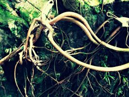 Rooted by Lesbehonest