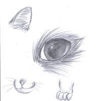 How to draw a cat by 1PencilBurner