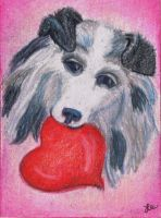My Puppy Valentine - Collie by clay-dreams