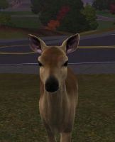 Doe - The Sims 3 by CutieWolf1