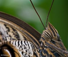 Butterfly 14 by Prototyps