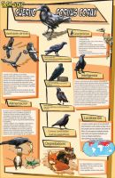 Infogram Crow by Jaehthebird