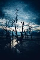 Muddy beach and dead forest by juhku