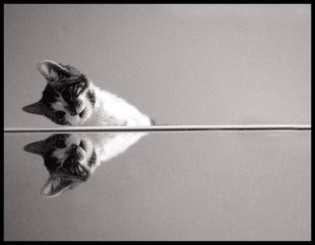 mirrored cat by beethy