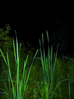 Cattails 2.1.1 by marshwood