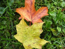 autumn leaves by BlueIvyViolet