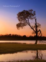 Sunset Tree at the Lake by FallesenPhotography