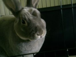 My Bunny named Peter by Emily183