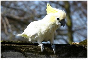 Cockatoo Above Me by In-the-picture
