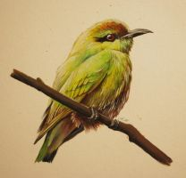 Green Bee Eater by TumblingTortoises