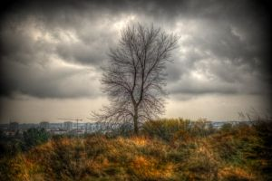 Early Autumn by kubica