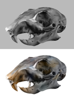 squirrel skull study by Jerner
