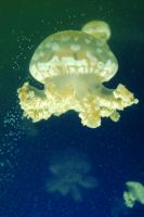 Stock 459 - Jellyfish by pink-stock
