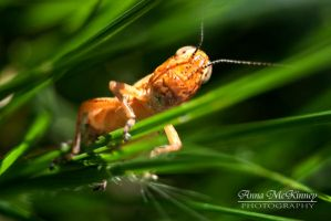 Grasshopper World by Annushkka