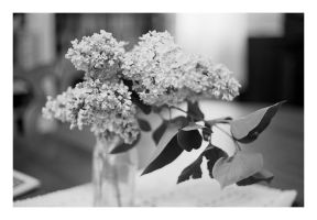 2014-147 Lilacs on the table by pearwood