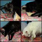 Cat Enrichment by Leonca