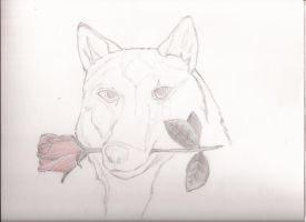 Some random wolf, working on it... by fragozo