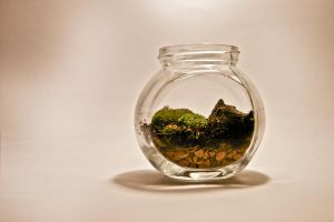 Mini Moss Terrarium by botaninko