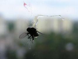 dead fly 01 by Caltha-stock