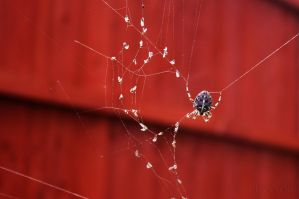 Spider at Work by Pzychonoir