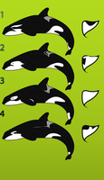 Orca Adopts by Aktasak