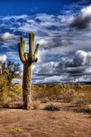 One Tall Catus by gemlenz