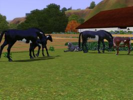 Sims 3 Horse Marking Download: Mix-n-Match1 by Isolated-Design