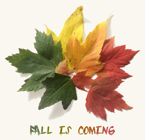 Fall is Coming by RicePoison
