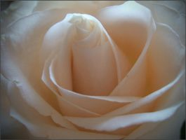 Heart of a white rose by mirator